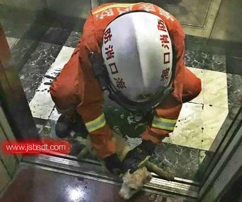 消防人员营救小狗